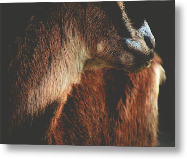 Goat Love Metal Print
