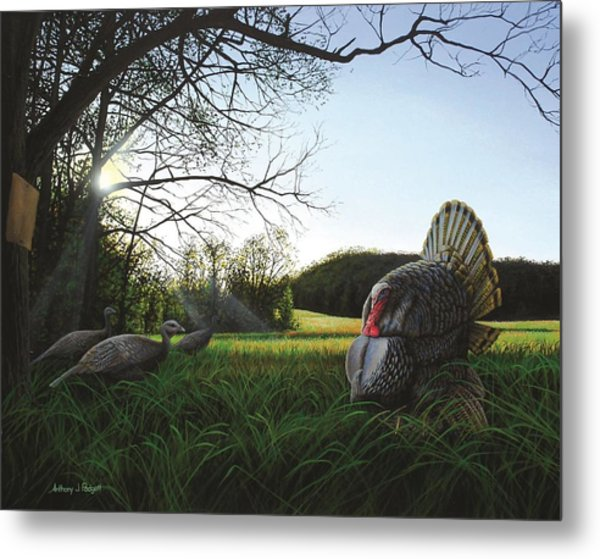 Gobbler's Morning Dance Metal Print