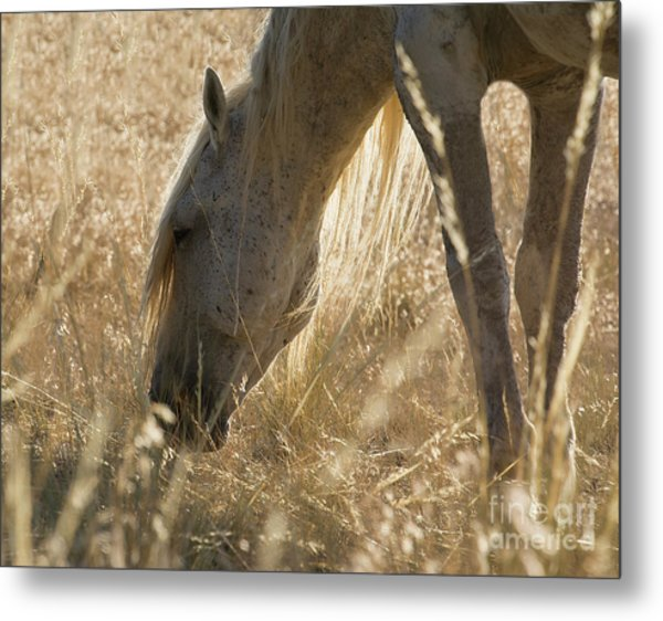 Going Through The Light Metal Print by Nicole Markmann Nelson