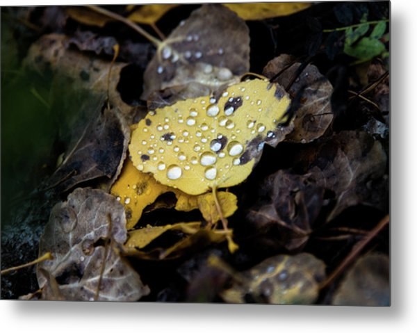 Metal Print featuring the photograph Gold And Diamons by Stephen Holst