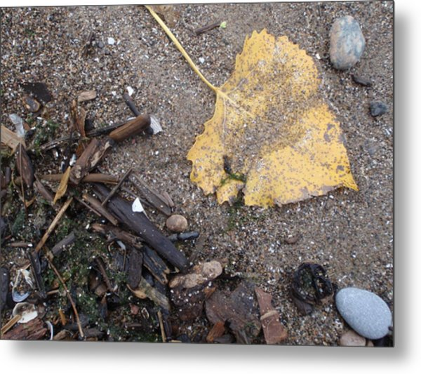 Golden Metal Print by Anthony Haight
