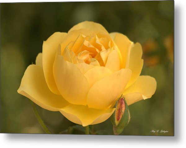 Golden Breath Metal Print