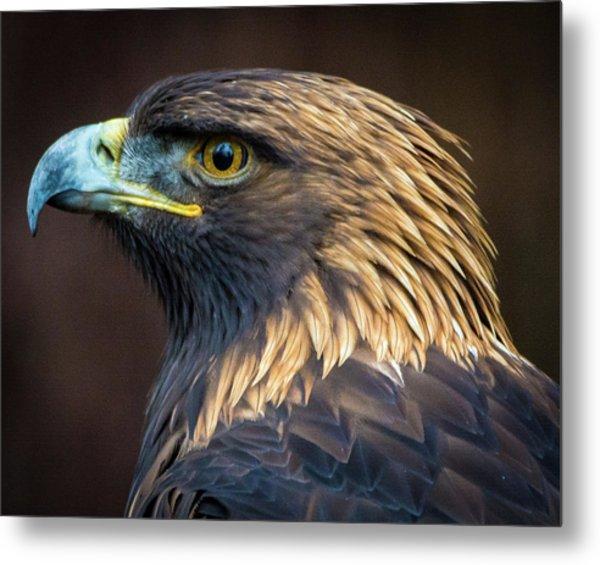 Golden Eagle 2 Metal Print