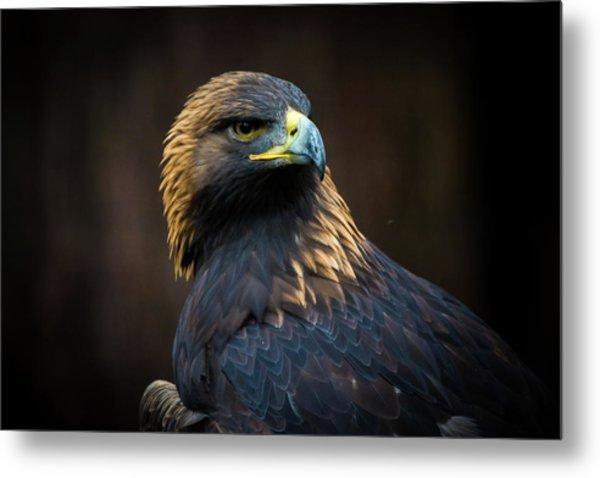 Golden Eagle 3 Metal Print