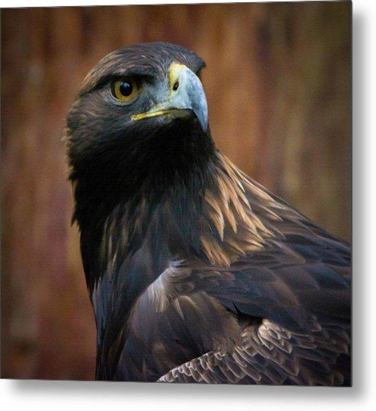 Golden Eagle 4 Metal Print