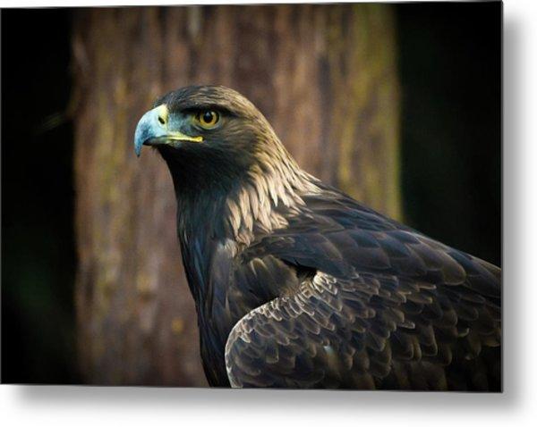 Golden Eagle 5 Metal Print