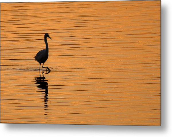 Golden Egret Metal Print