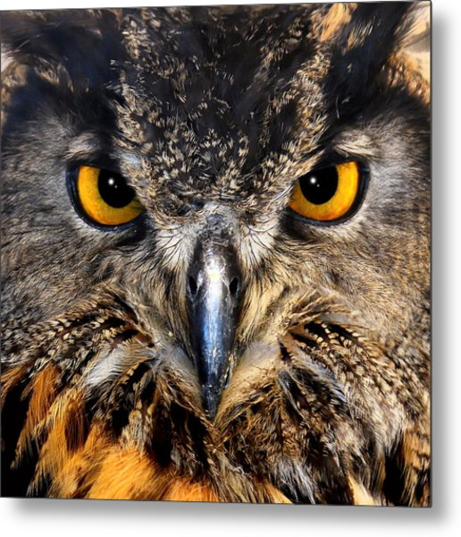 Golden Eyes - Great Horned Owl Metal Print