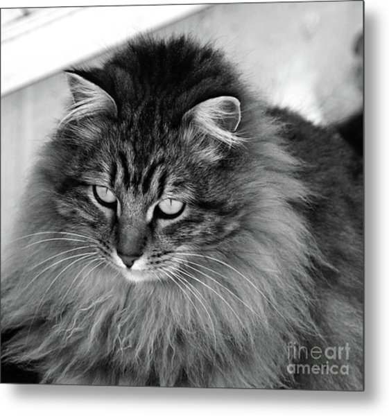 Golden Eyes Two Metal Print