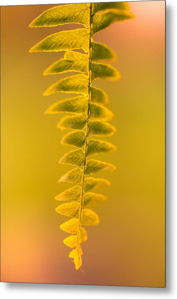Golden Fern Metal Print