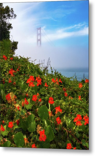 Metal Print featuring the photograph Golden Gate Blooms by Darren White