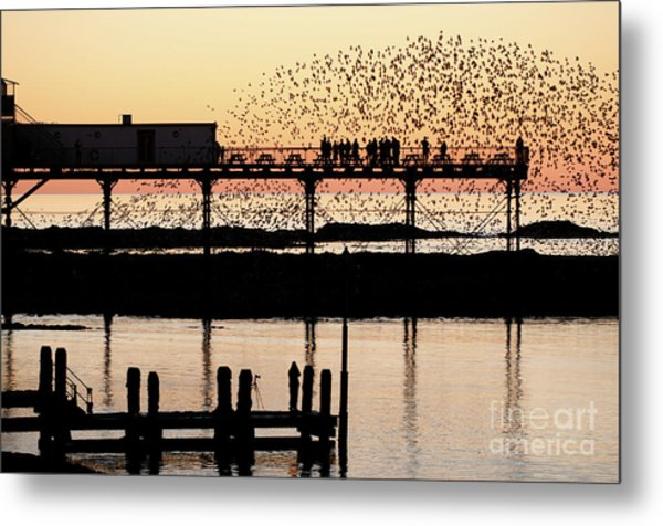 Golden Hour Starlings In Aberystwyth Metal Print
