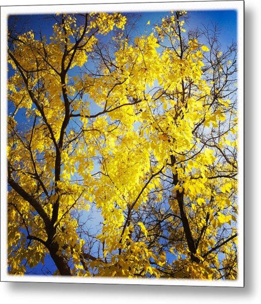 Golden October Tree In Fall Metal Print
