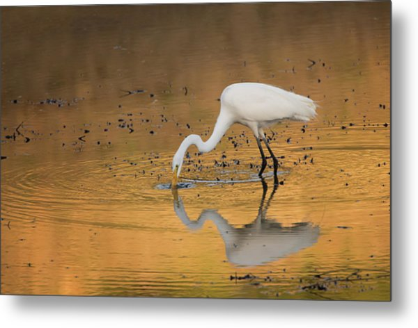 Golden Pond Metal Print