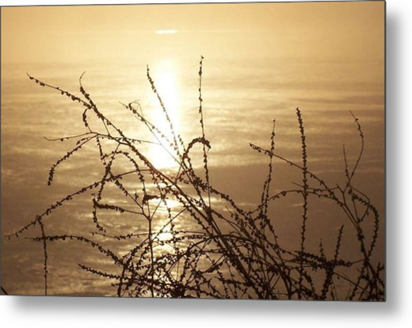 Golden Pond Metal Print by Laurie Prentice