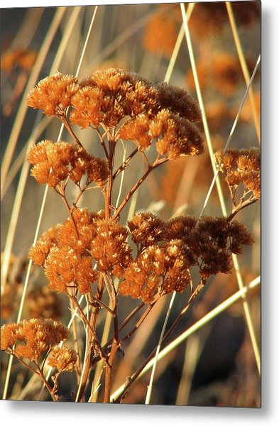 Golden Reach Metal Print