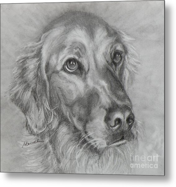 Golden Retriever Drawing Metal Print