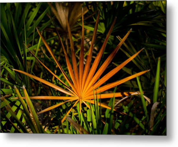 Golden Saw Palmetto Metal Print