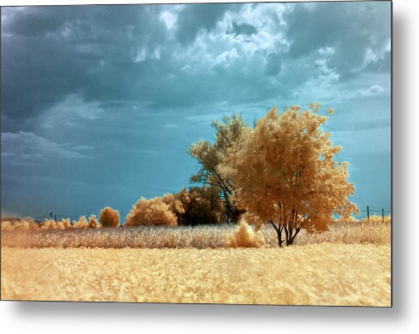 Metal Print featuring the photograph Golden Summerscape by Helga Novelli