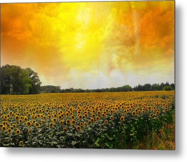 Golden Sunflowers Of Nimes Metal Print by Melvin Kearney