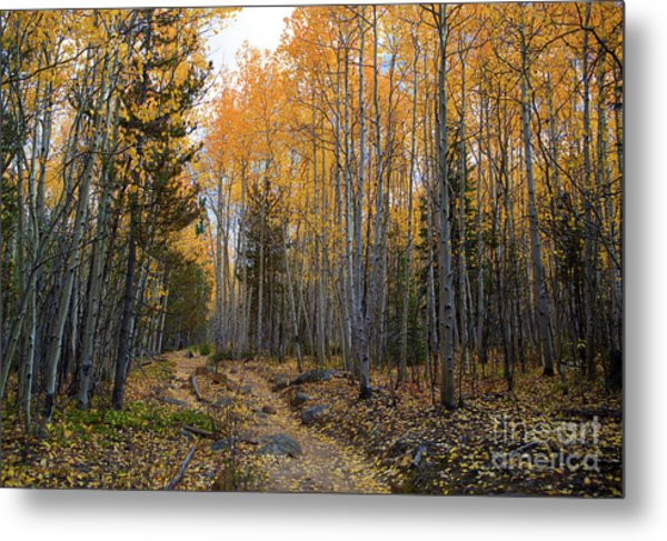 Golden Trail Metal Print by Barbara Schultheis