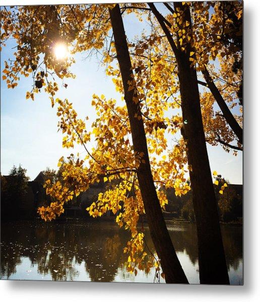 Golden Trees In Autumn Sindelfingen Germany Metal Print