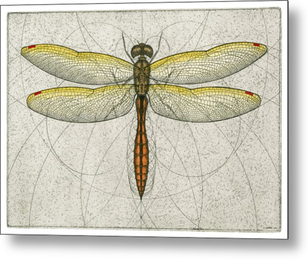 Golden Winged Skimmer Metal Print