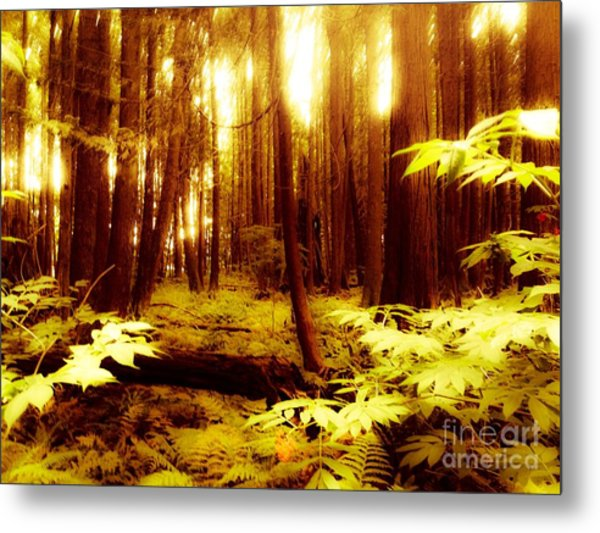 Golden Woods Metal Print