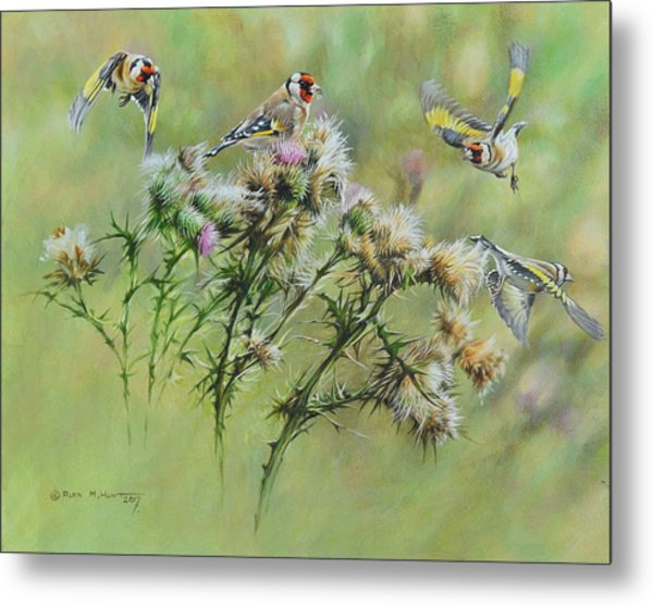 Goldfinches On Thistle Metal Print
