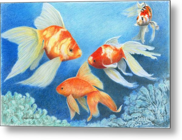 Metal Print featuring the drawing Goldfish Tank by Phyllis Howard