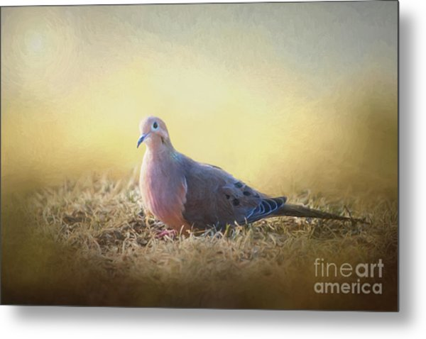 Good Mourning Dove Metal Print