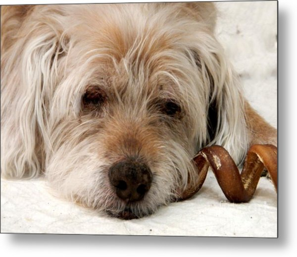 Metal Print featuring the photograph Goodbye Old Friend by Laura Wong-Rose
