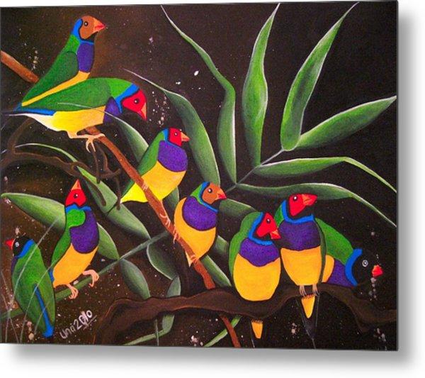 Gouldian Finch Rainbow Metal Print by Una  Miller