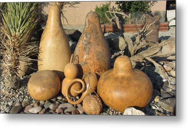 Gourds In The Sun Metal Print