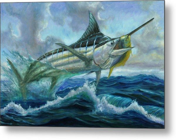 Grand Blue Marlin Jumping Eating Mahi Mahi Metal Print