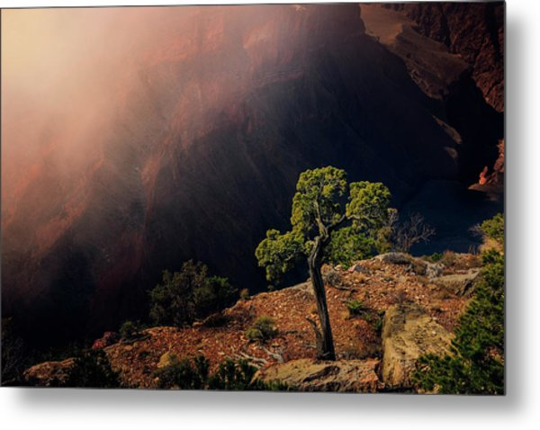 Grand Canyon Juniper Metal Print