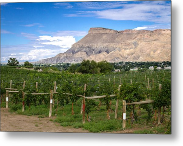 Grand Valley Vineyards Metal Print