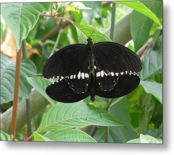 Graphic Sex In The  Butterfly House  Metal Print
