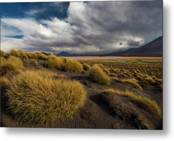 Grass Hat Metal Print by Aaron Bedell