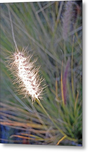 Grass Light Metal Print by Jean Booth