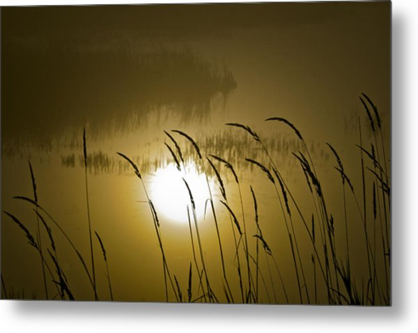 Grass Silhouettes Metal Print