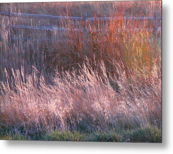 Grasses 1 Metal Print