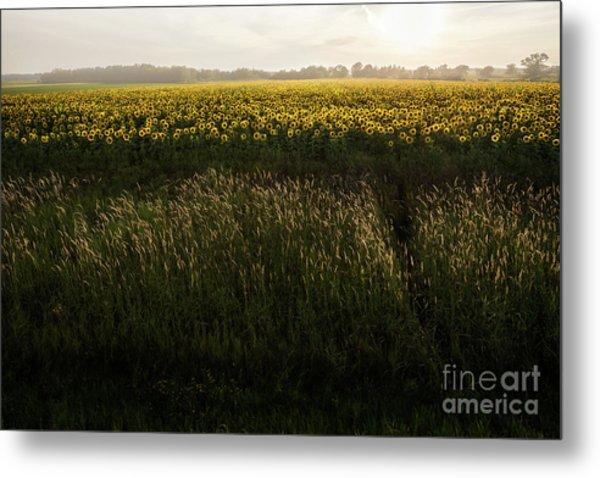 Grasses And Sunflowers 1 Metal Print by Ernesto Ruiz