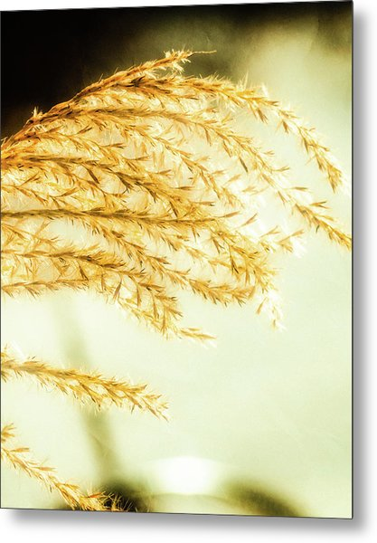 Grasses Of Gold Metal Print