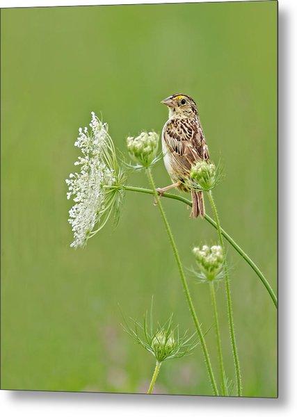Grasshopper Sparrow Metal Print