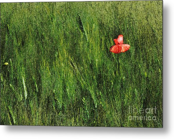 Grassland And Red Poppy Flower 2 Metal Print