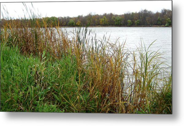 Grassy Bank Metal Print