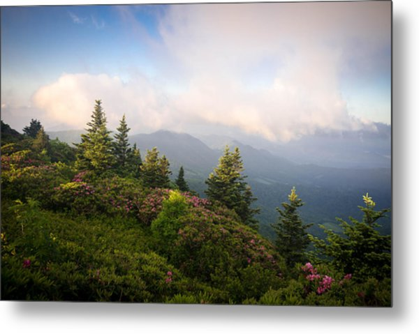 Grassy Ridge Rhododendron Bloom Metal Print