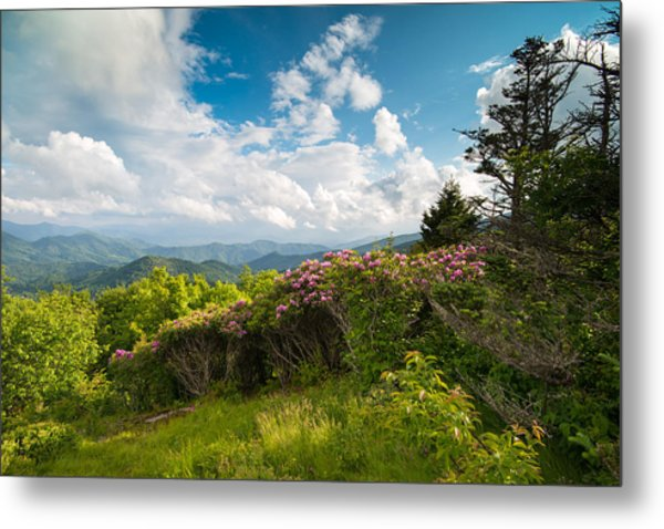 Grassy Ridge Roan Highlands Rhododendrons On The Appalachian Trail Metal Print