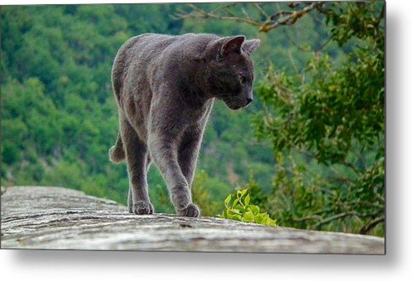 Gray Cat Stalking Metal Print